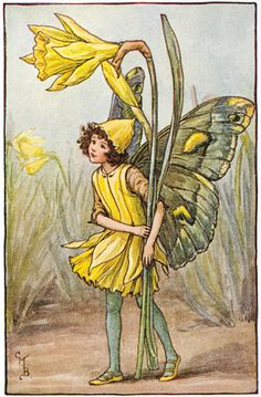 "Vintage print 'The Daffodil Fairy' by Cicely Mary Barker from ""The Book of the Flower Fairies""; Poem and Pictures by Cicely Mary Barker, Published by Blackie & Son Limited, London [Flower Fairies - Spring] Cicely Mary Barker, Kobold, Daffodil Flower, Flower Poem, Birth Flower, Vintage Fairies, Flower Fairies, Fantasy Illustration, Fairy Art"