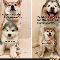 Fresh Animal Memes To Mix In Your Morning Coffee - Pampered Pets Funny Animal Jokes, Cute Funny Animals, Funny Cute, Funny Kids, Funny Work, Animal Humor, Cute Animal Pictures, Funny Pictures, Cute Animal Quotes