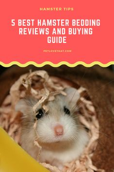 You need to know the natural habitat of your hamster and provide beddings that makes its cage look like a natural habitat to them. Hamster Diy Cage, Small Hamster, Hamster Care, Russian Hamster, Hamster Accessories, Hamster Bedding, Syrian Hamster, Hotel Collection Bedding, Bed Reviews