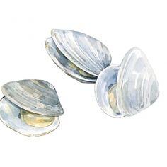clams watercolor