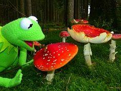 Kermit, Frog, Mushrooms