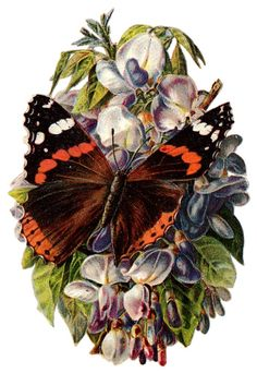 These gorgeous free printable vintage butterfly pictures can be used as clip art or can even be printed and framed to decorate your home. Butterfly Pictures, Butterfly Frame, Vintage Butterfly, Vintage Flowers, Orange Butterfly, Vintage Diy, Vintage Ephemera, Vintage Postcards, Dragonfly Illustration