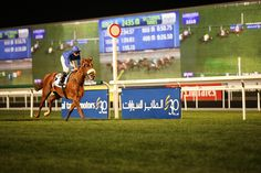 Dubai World Cup, The World's Most Expensive Horse Race