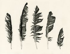 feather, art, and black and white image
