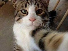 かわいいネコの自撮り41