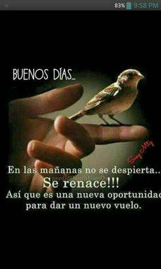 Renace!
