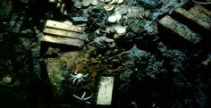 Off the coast of South Carolina scientists and explorers have found gold and coins but the real treasure is the sea organisms surrounding the wreck. These organism according to scientists might reap a different kind of treasure- the kind that saves lives!