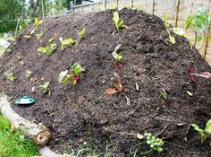 Вместо того, чтобы сжигать ветки, листья и скошенную траву после чистки вашего огорода и сада вы могли бы построить Hügel грядку, больше известную, как высокая грядка Хольцера. Проще говоря это большой (около 1,5 м) насыпной курган, куда сбрасывают ветки, листья, скошенную траву, солому, картон, бумагу, навоз, компост или любую другую биомассу, которая есть под рукой, и сверху засыпается землей и высаживаются овощи.