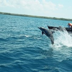 Dolphins exist in habitats around the world.