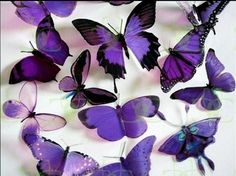 31 best Free Butterfly Wallpaper pictures in the best available resolution. The Purple, All Things Purple, Purple Rain, Shades Of Purple, Purple Flowers, Purple Stuff, Purple Colors, Purple Ombre, Purple Butterfly Wallpaper