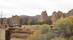 Marmalade watching rock climbers scaling Smith Rock near Terrebonne, Oregon.