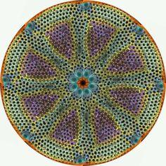Vortex diatom (single-cell algae)