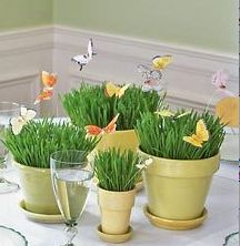 Very cute butterfly centerpieces by Annette at Simply Natural Events, via Flickr