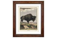 Georges-Louis Leclerc, Bison on OneKingsLane.com
