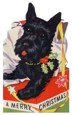 Black Scottie, Christmas card - vintage - Angus is everywhere!