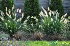 Lawendowy zawrót głowy - strona 693 - Forum ogrodnicze - Ogrodowisko