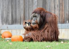 redd with mom batang smithsonian national zoo pinterest zoos