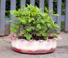 New Craze: Old Tire Planters!#/166172/new-craze-old-tire-planters?&_suid=1366241866700005672472552699265