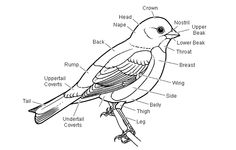 Complete Bird Guide Online - Bird Breeds, Bird Information And Photos