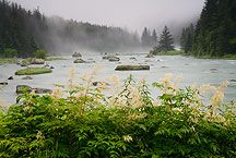 Chilkoot River Photos