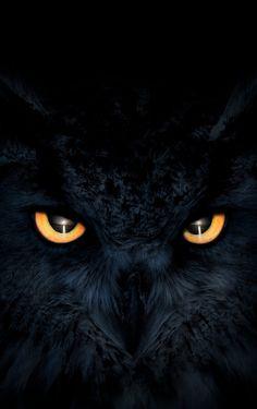 owl art projects for kids . owl art for kids . Owl Wallpaper Iphone, Eyes Wallpaper, Animal Wallpaper, Dark Wallpaper, Iphone Wallpapers, Cute Owls Wallpaper, Trendy Wallpaper, Wallpaper Wallpapers, Owl Photos
