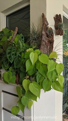 Philodendron Scandens, Kuala Lumpur, Air Plants, Sustainability, My House, Pots, Tropical, Gardening, Living Room