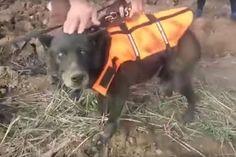Dog Saved on Christmas Day