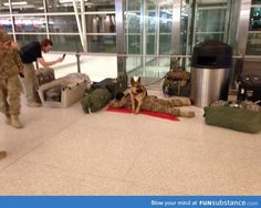 """Military dog """"protecting"""" soldier. Pretty sweet pic"""