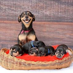 The Enchanted Cove Baby Puppies, Cute Puppies, Cute Dogs, Dogs And Puppies, Funny Dogs, Animals And Pets, Baby Animals, Funny Animals, Cute Animals