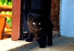 please follow us, like and post feedback if this pet is lovable:) #cats #catsagram #catstagram #instagood #kitten #kitty #kittens #pets #animal  #petstagram #petsagram  #catsofinstagram #ilovemycat #instagramcats #catoftheday #lovecats #lovekittens #catlover #instacat  #dog #puppy #pup #dogsofinstagram #ilovemydog