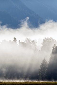 Fine Art Print Of Misty Forest Sunrise, Nature Photography, Wall Art, Landscape Print, Decor, Alaska, Wilderness, Nature Print by NaturePrintShop on Etsy https://www.etsy.com/sg-en/listing/475909502/fine-art-print-of-misty-forest-sunrise