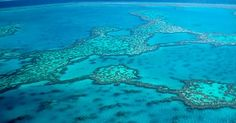 It is no surprise the Great Barrier Reef is Australia's most popular destination. When is the best time to visit? Read to find out and view our tours. Great Barrier Reef, How To Find Out, Tours, Good Things, Places, Lugares