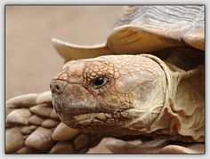 The whole frame is filled with just the subject of the turtle.  -Anthony Cioeta