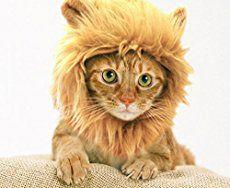 Lion's Mane Cat Hat