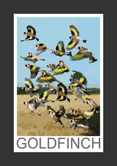 Goldfinch flock (Art Print)
