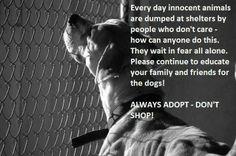 Always adopt...don't shop.