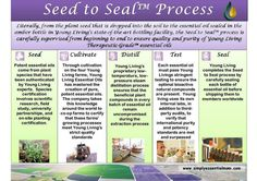 Young Living Seed to Seal Process: Young Living takes great strides to provide the BEST quality essential oils available!! From Seed to Seal!! Literally, from the plant seed that is dropped into the soil to the essential oil sealed in the amber bottle in Young Living's state-of-the-art bottling facility!! The Seed to Seal process is carefully supervised from beginning to end to ensure quality and purity of Young Living Therapeutic-Grade essential oils.