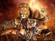 Wild Animals Wallpaper: Big Cats
