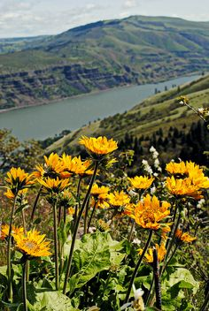 Tom McCall Preserve Eastern Columbia River Gorge