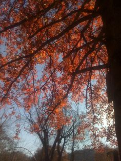 Archer Park, Prestonsburg, KY.... I love trees.