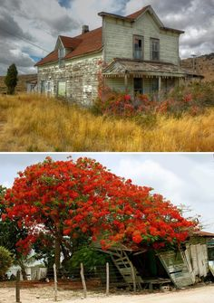 Flower Power: Abandoned Buildings (& Objects) Transformed by Foliage