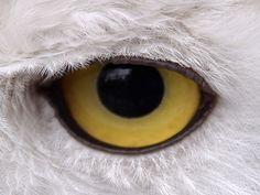 IlPost - L'occhio di un gufo allo zoo di Gelsenkirchen, in Germania (AP Photo/Martin Meissner) - L'occhio di un gufo allo zoo di Gelsenkirchen, in Germania  (AP Photo/Martin Meissner)
