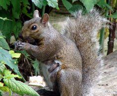 Squirrel by angelandspot.deviantart.com on @deviantART