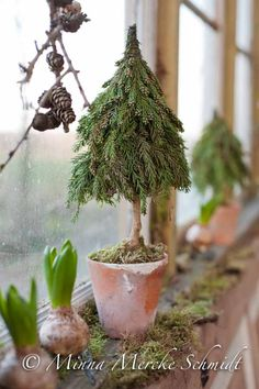 DIY minigran-DIY minigran Recipe for a cute mini spruce You will need: Pot Flower mass or oasis Spruce (here cryptomeria) Conformed frigolite piece (eg Panduro) A stick (nature, approx. 20 cm) Coil wire (soft steel wire on roll) … - Nordic Christmas, Natural Christmas, Noel Christmas, Little Christmas, Rustic Christmas, All Things Christmas, Winter Christmas, Woodland Christmas, Miniature Christmas