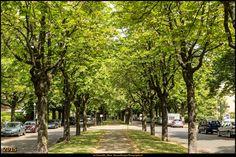 Steinbergpark (Bezirk Reinickendorf) 1 #Steinbergpark #Berlin #Deutschland #Germany #biancabuergerphotography #igersgermany #igersberlin #IG_Deutschland #IG_Berlin #ig_germany #shootcamp #shootcamp_ig #canon #canondeutschland #EOS5DMarkIII #5Diii #pickmotion #berlinbreeze #diewocheaufinstagram #berlingram #visit_berlin #reinickendorf #AOV5k #park