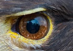 Eagle Images, Eagle Pictures, Bird Pictures, Beautiful Birds, Animals Beautiful, Birds Flying Away, Animal Close Up, Eagle Wallpaper, Eagle Drawing