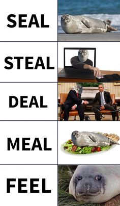 Many faces of seal