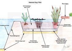 Choosing your Pond Filter at BestNest.com