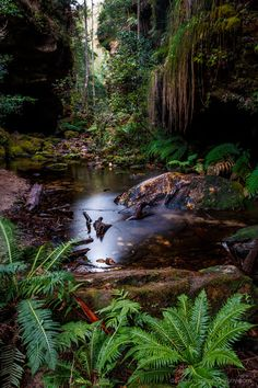 Blackheath, New South Wales, Australia...I stayed in a big Victorian mansion here when I was a child, lovely memories :)   RePinned by : www.powercouplelife.com