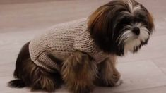Un manteau pour chien au point jersey 2 - Prima Knitted Dog Sweater Pattern, Knit Dog Sweater, Cat Sweaters, Yorkshire, Westies, Chien Shih Tzu, Point Mousse, Dog Wear, Dog Dresses